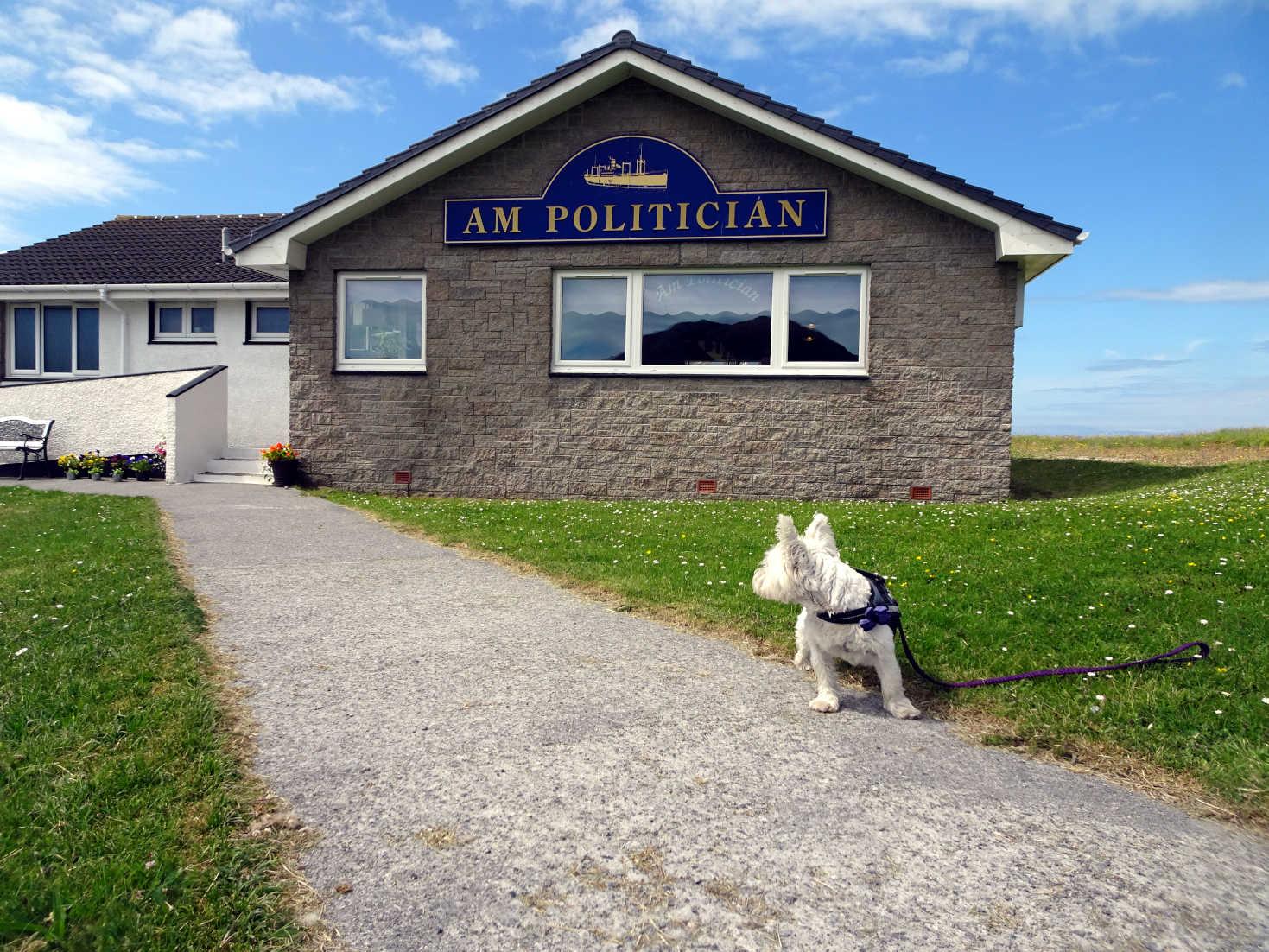 poppy the westie outside the AM Politician