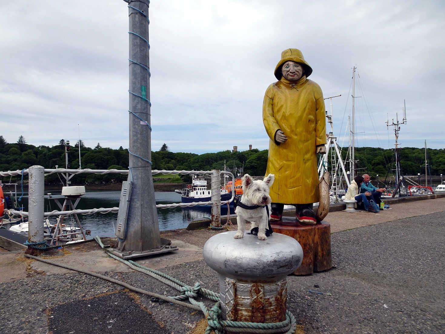 poppy the westie with fisherman in Stornaway