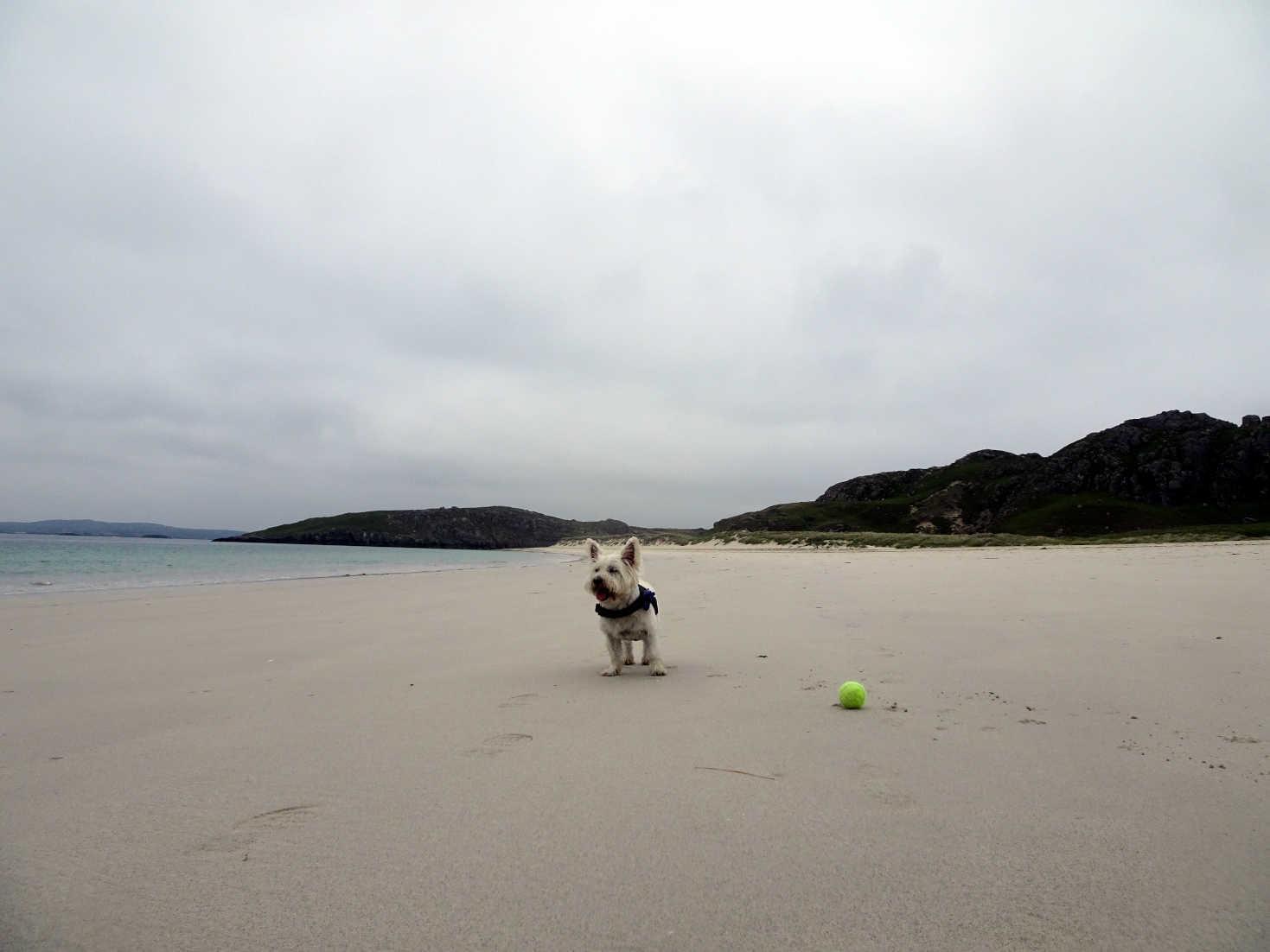 poppysocks playing ball on reef beach