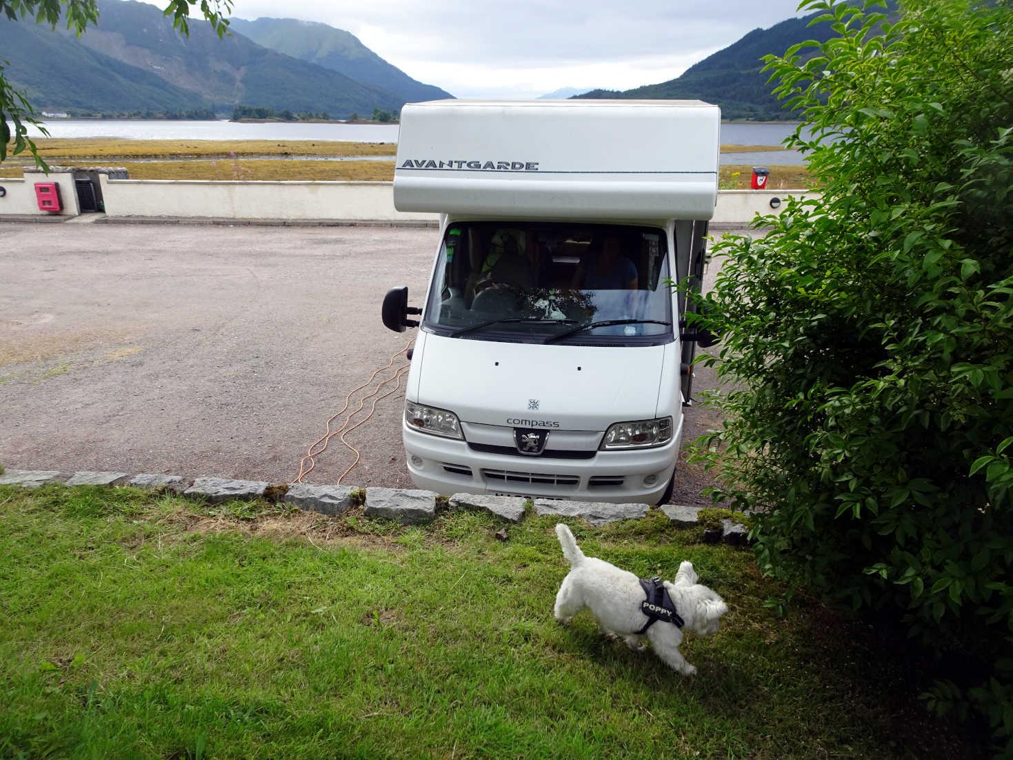 poppy explores campsite at glen coe