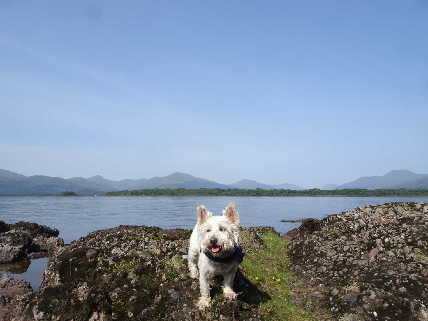 poppy the west at picnic spot Inchcailloch