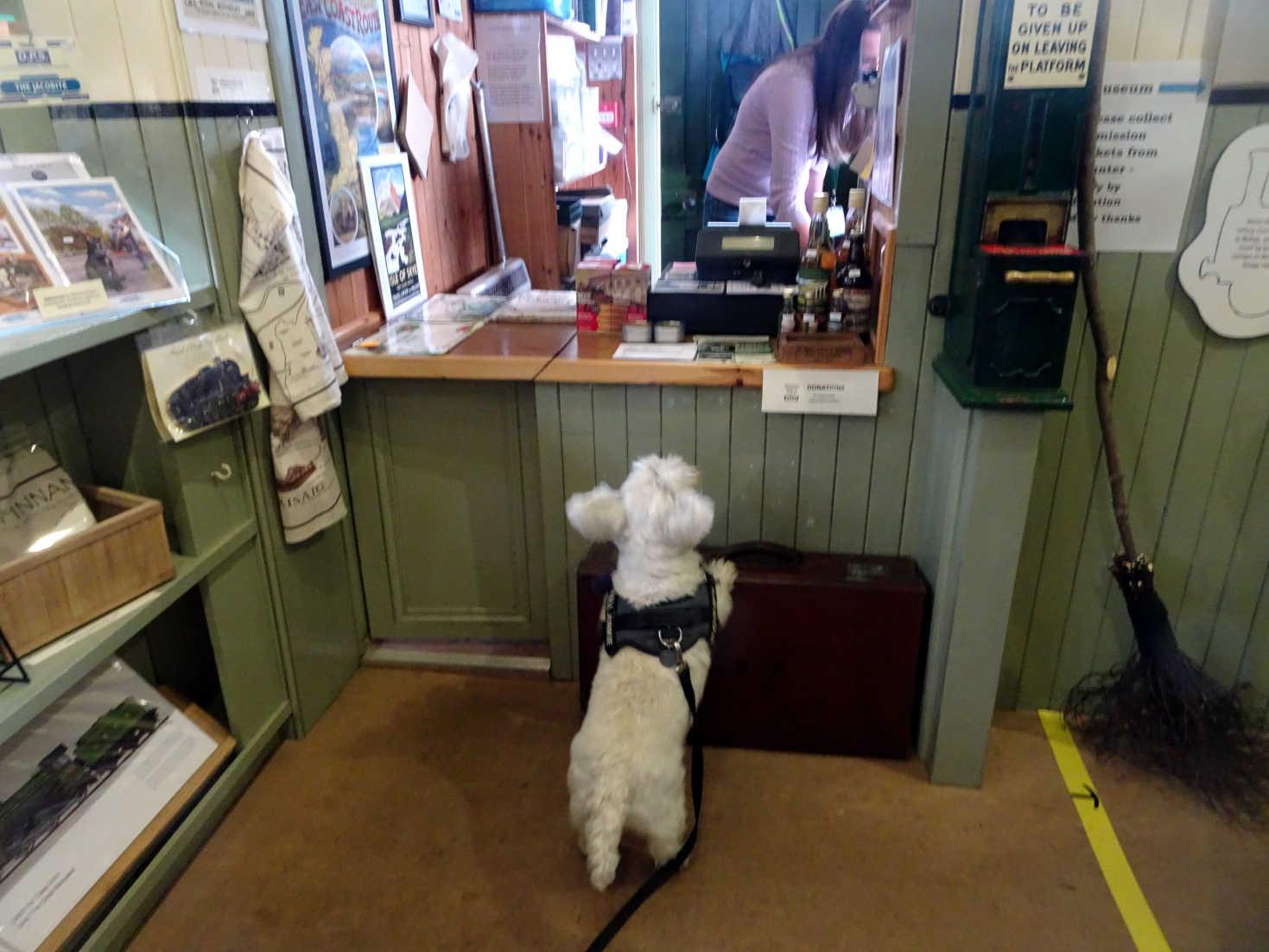 poppy the westie in glenfinnan ticket office