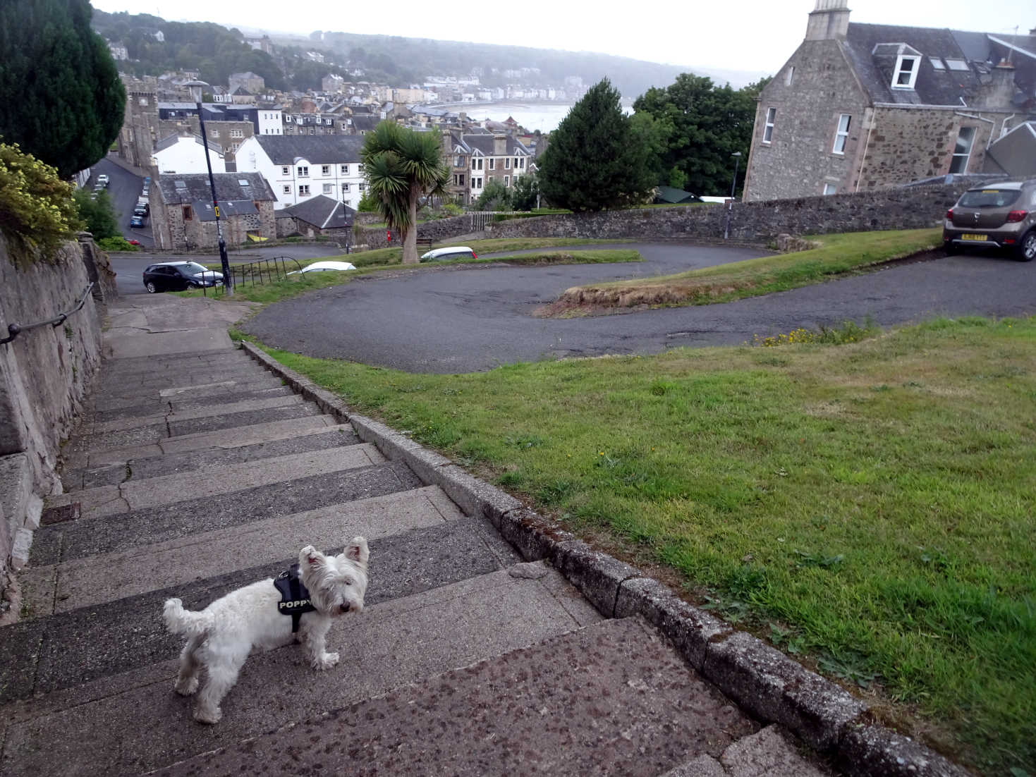 poppy the westie on the serpintine rothsay