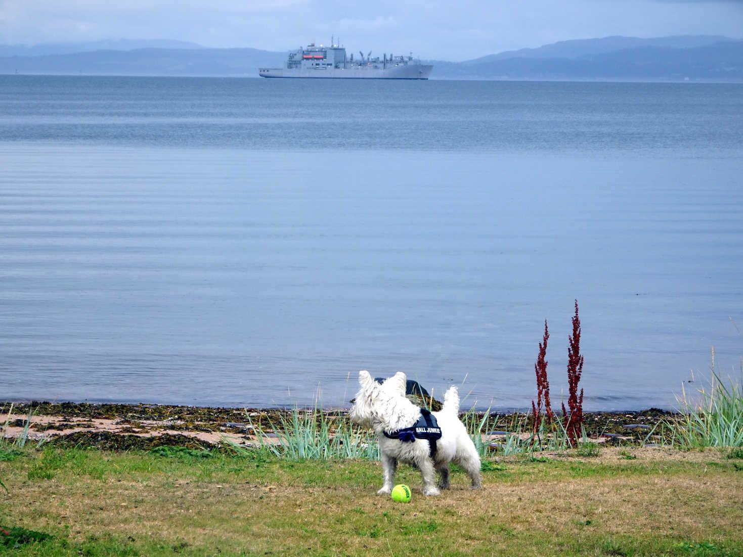poppy the westie spots a strange boat at kerrycroy