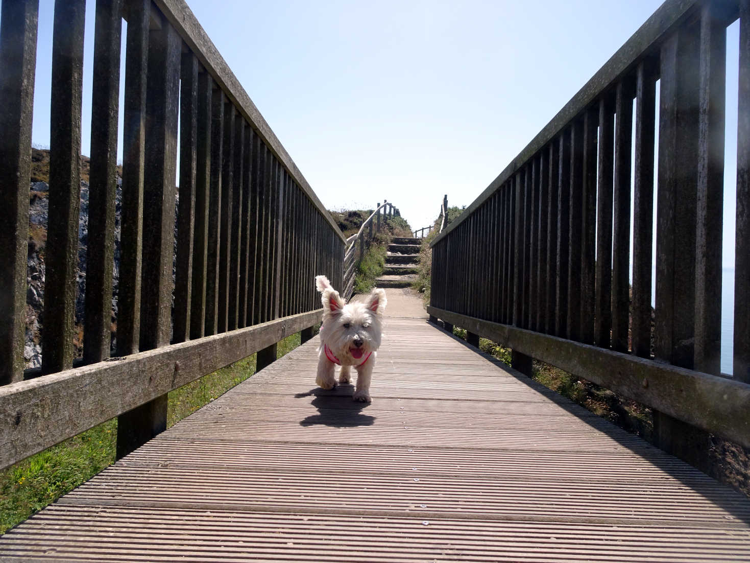 poppysocks crossing bridge at portpatrick