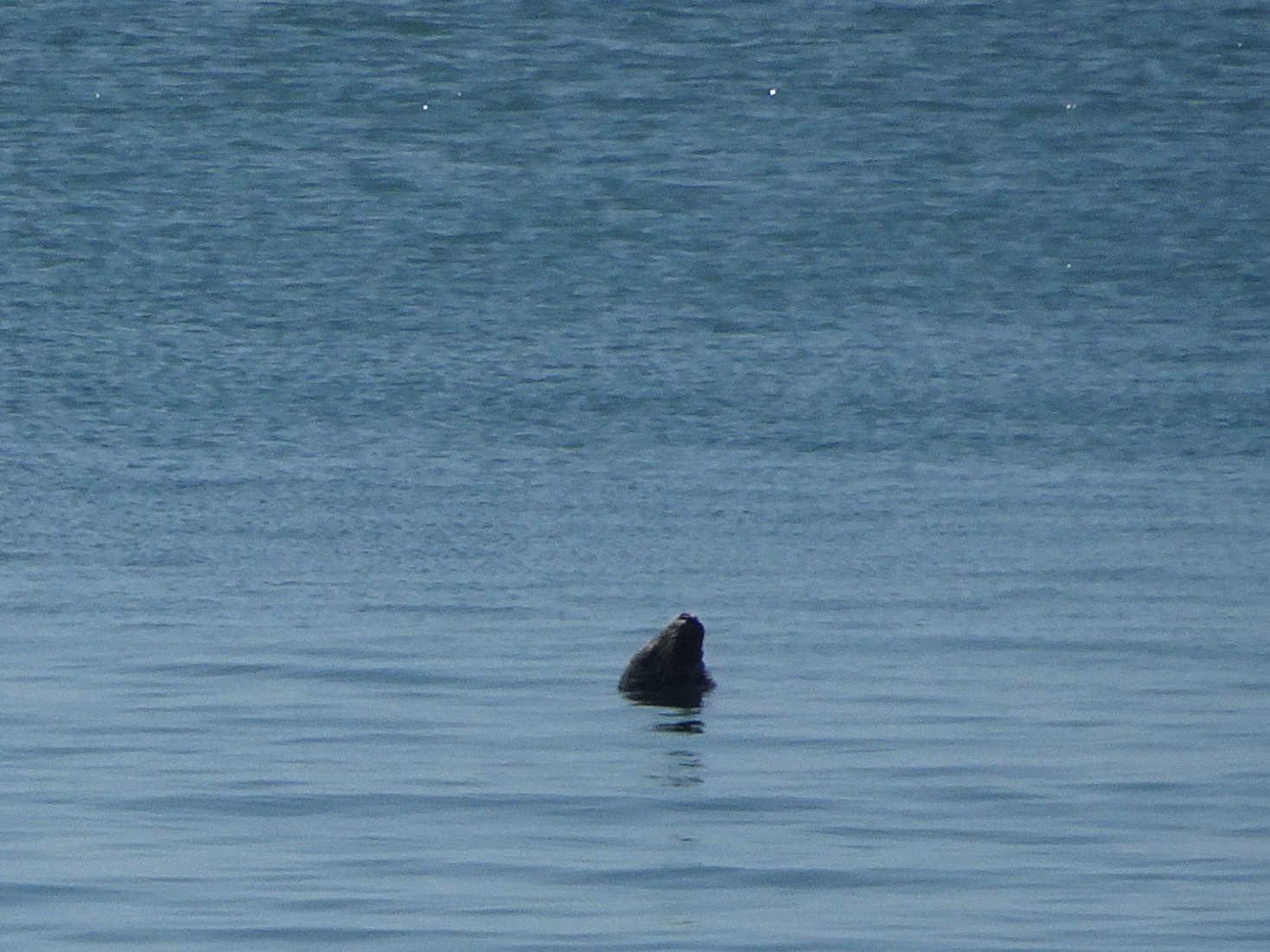sealmonster at portpatrick