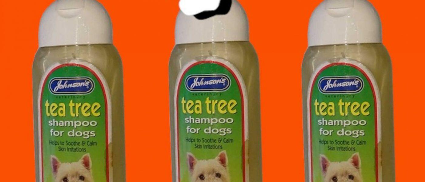 Johnson's Tea Tree shampoo – Review