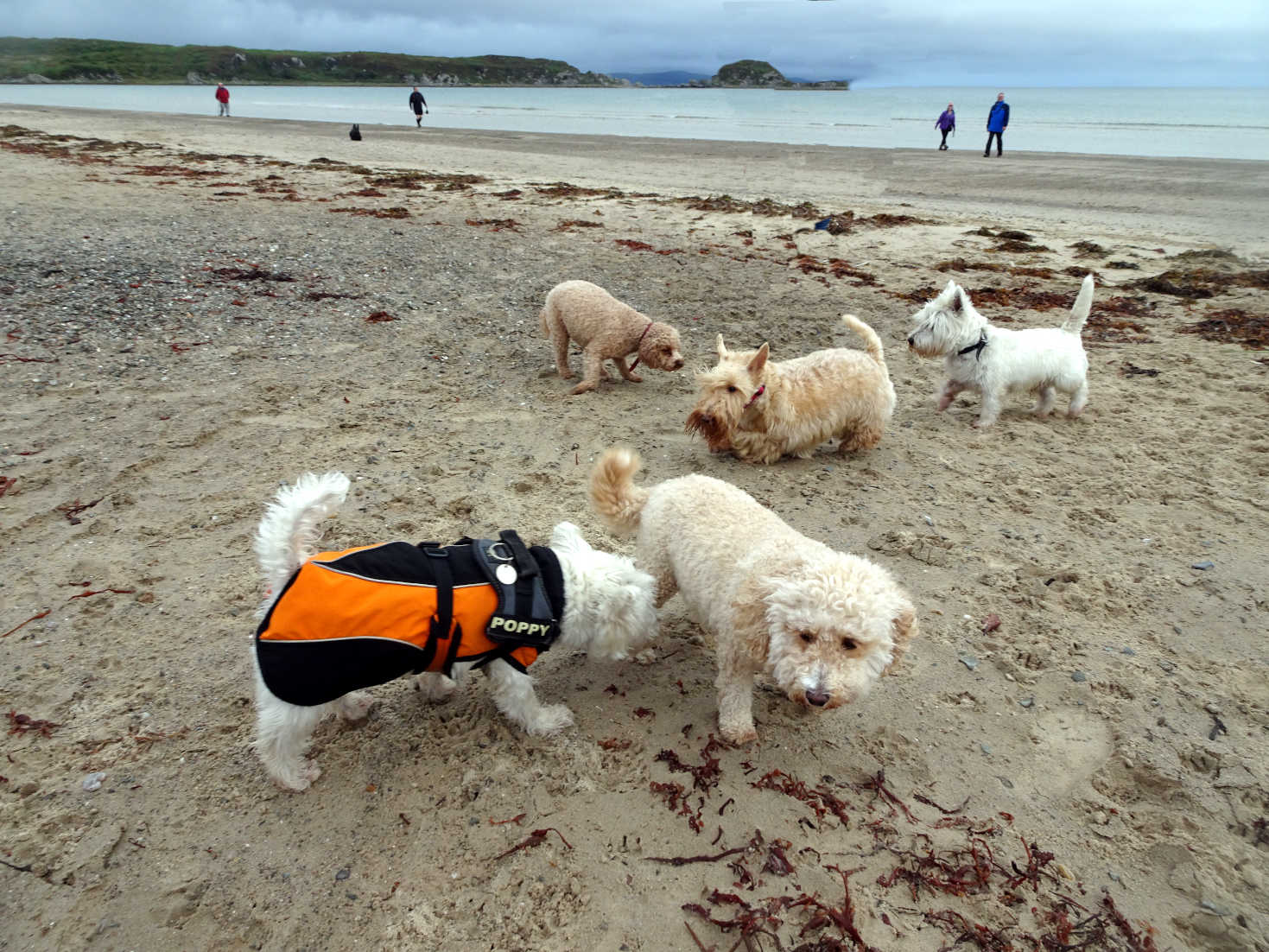 dogfest at carradale bay