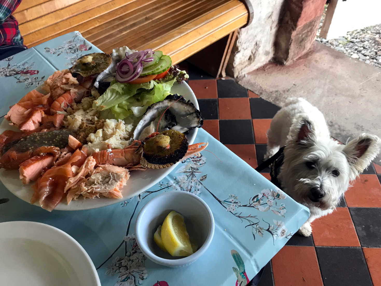poppy wants lunch at the seafood shack