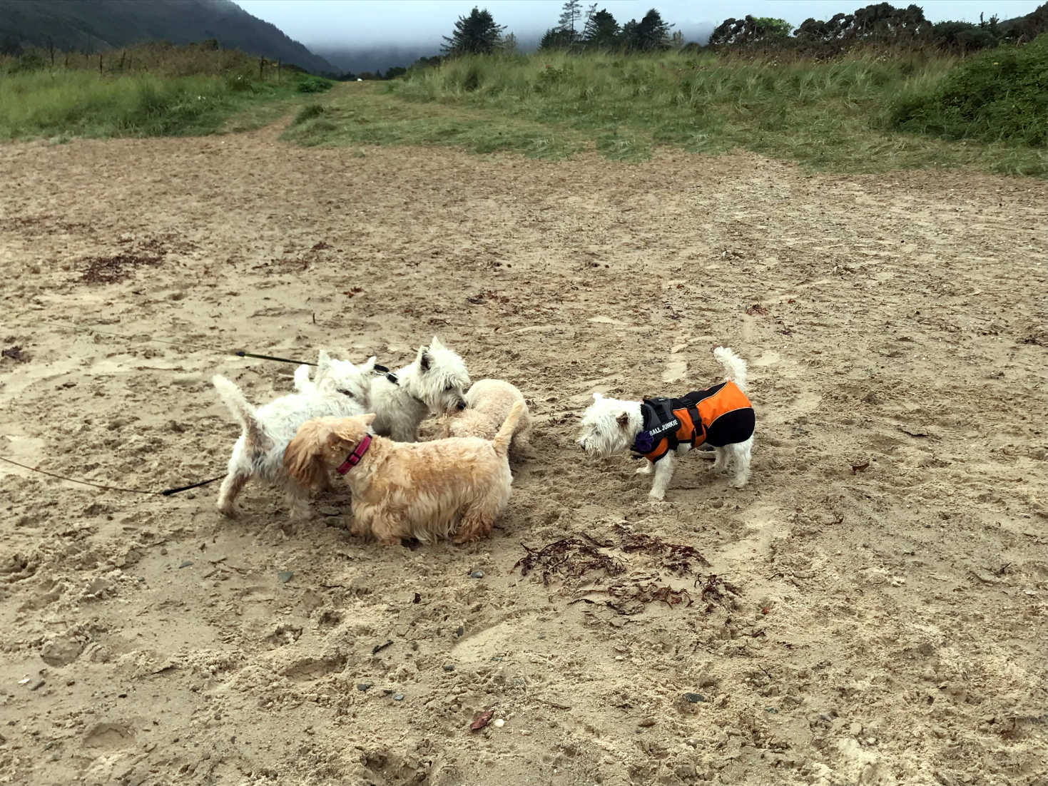 poppysocks and pals on caradale beach