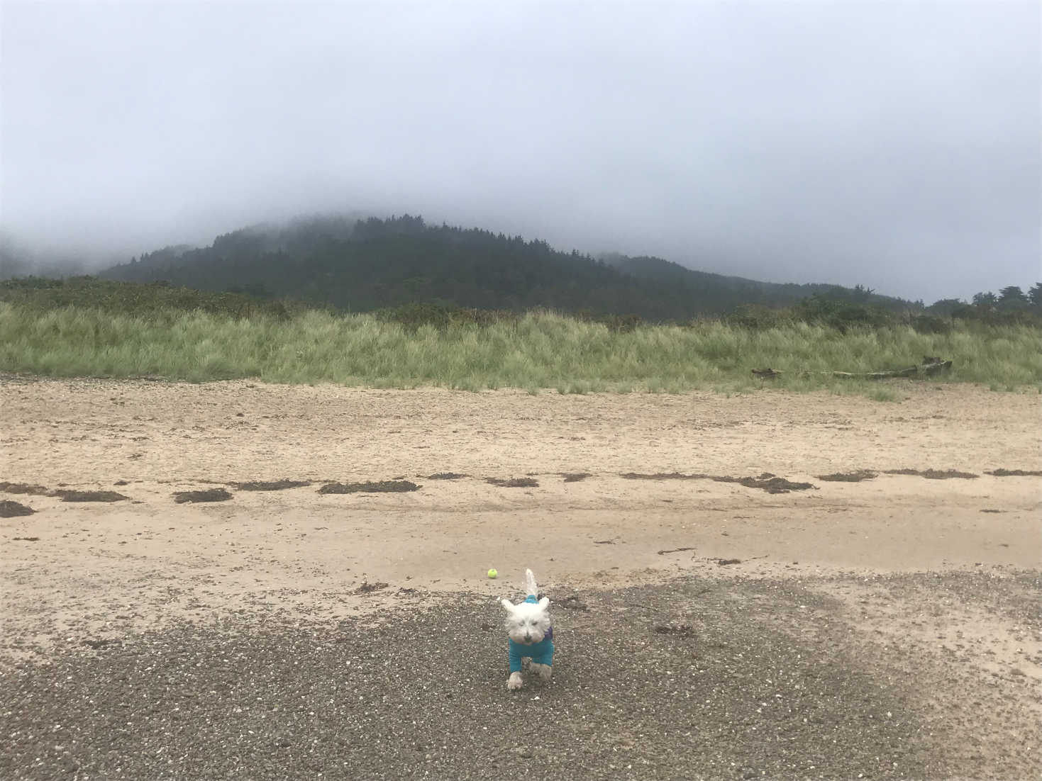 poppysocks on carradale beach in onsy
