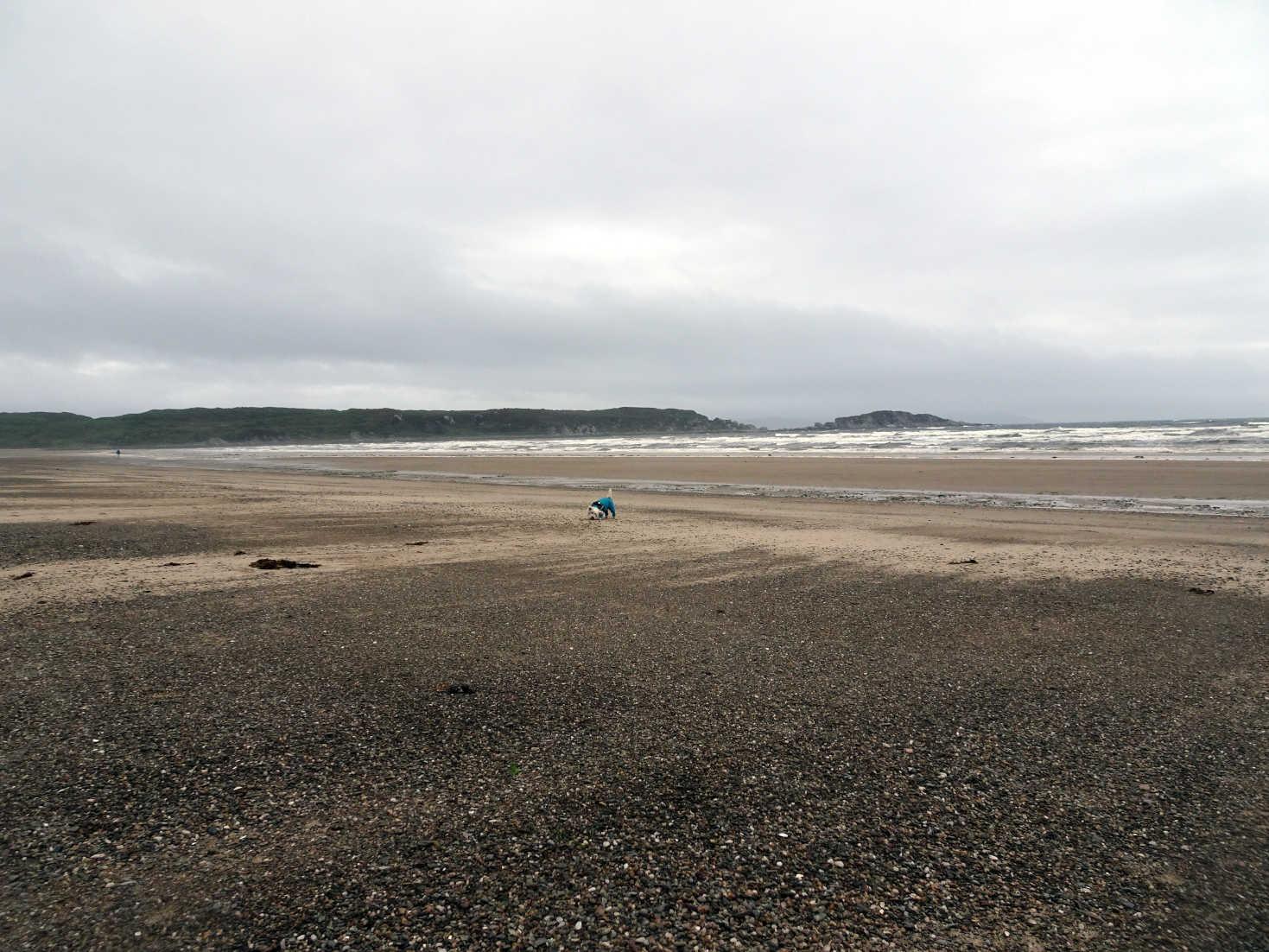 poppysocks on carradale beach on canter day