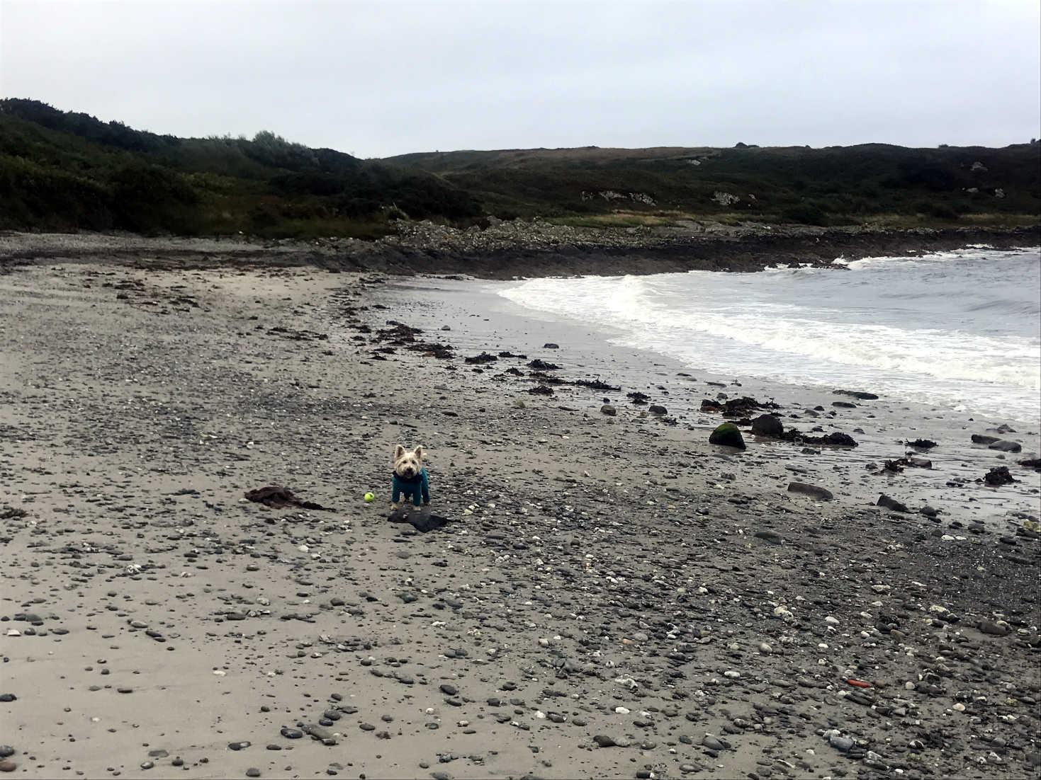 poppysocks on port righ beach