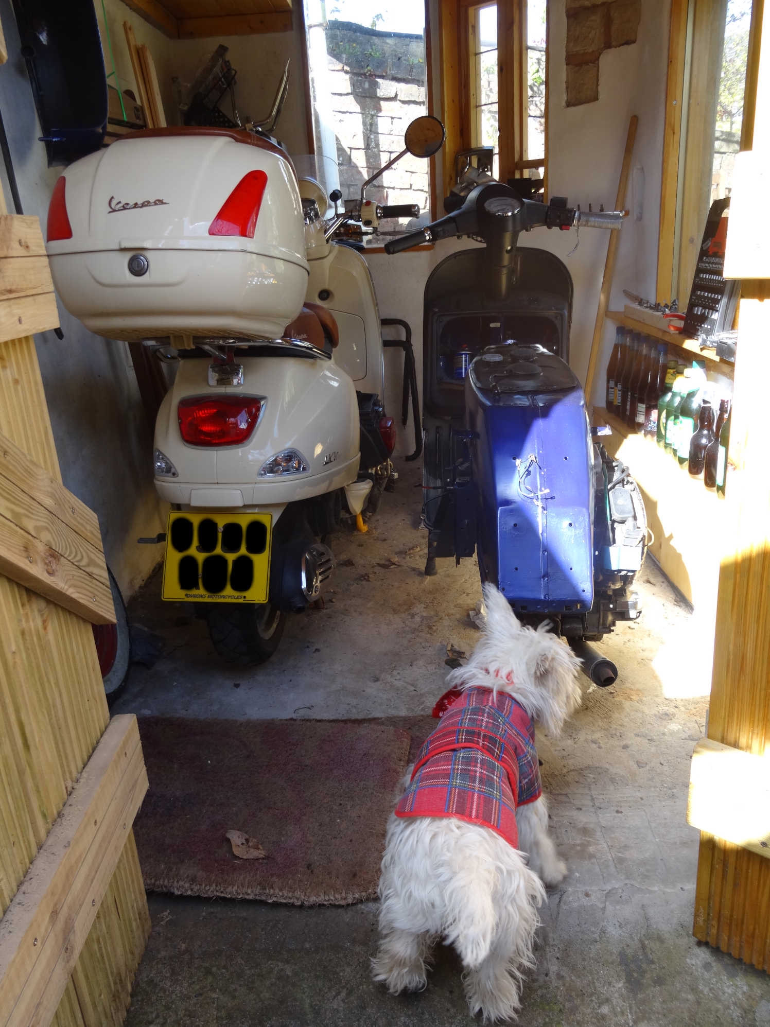 poppy helping dad in shed