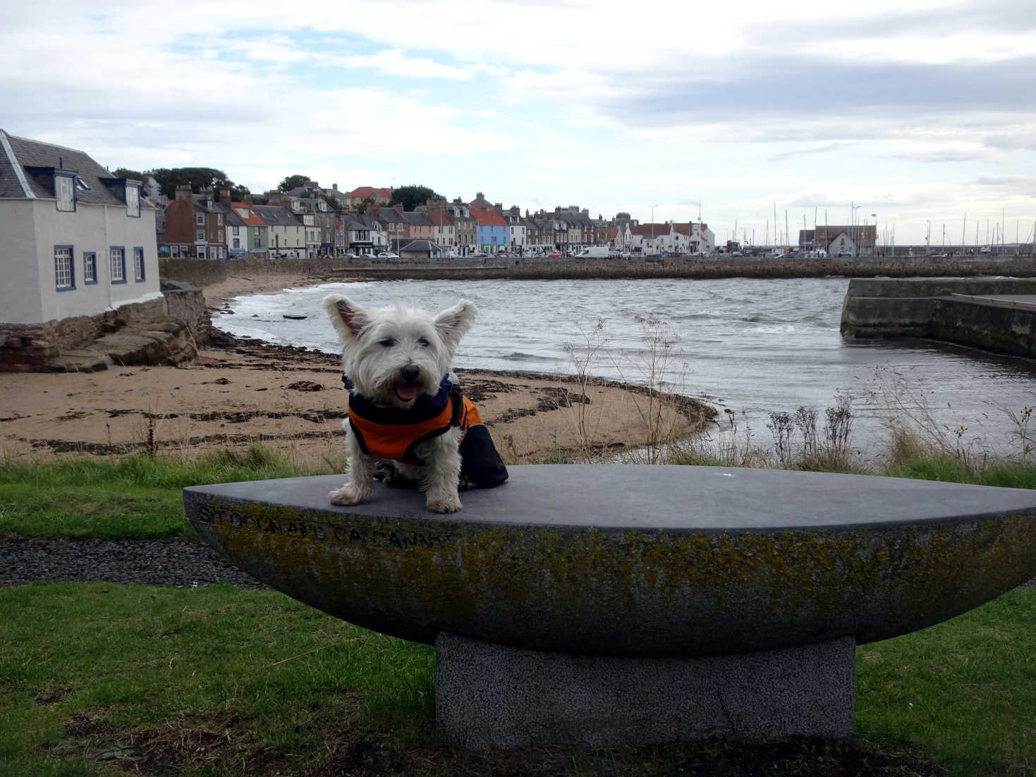 poppy the westie and anstruther in back ground