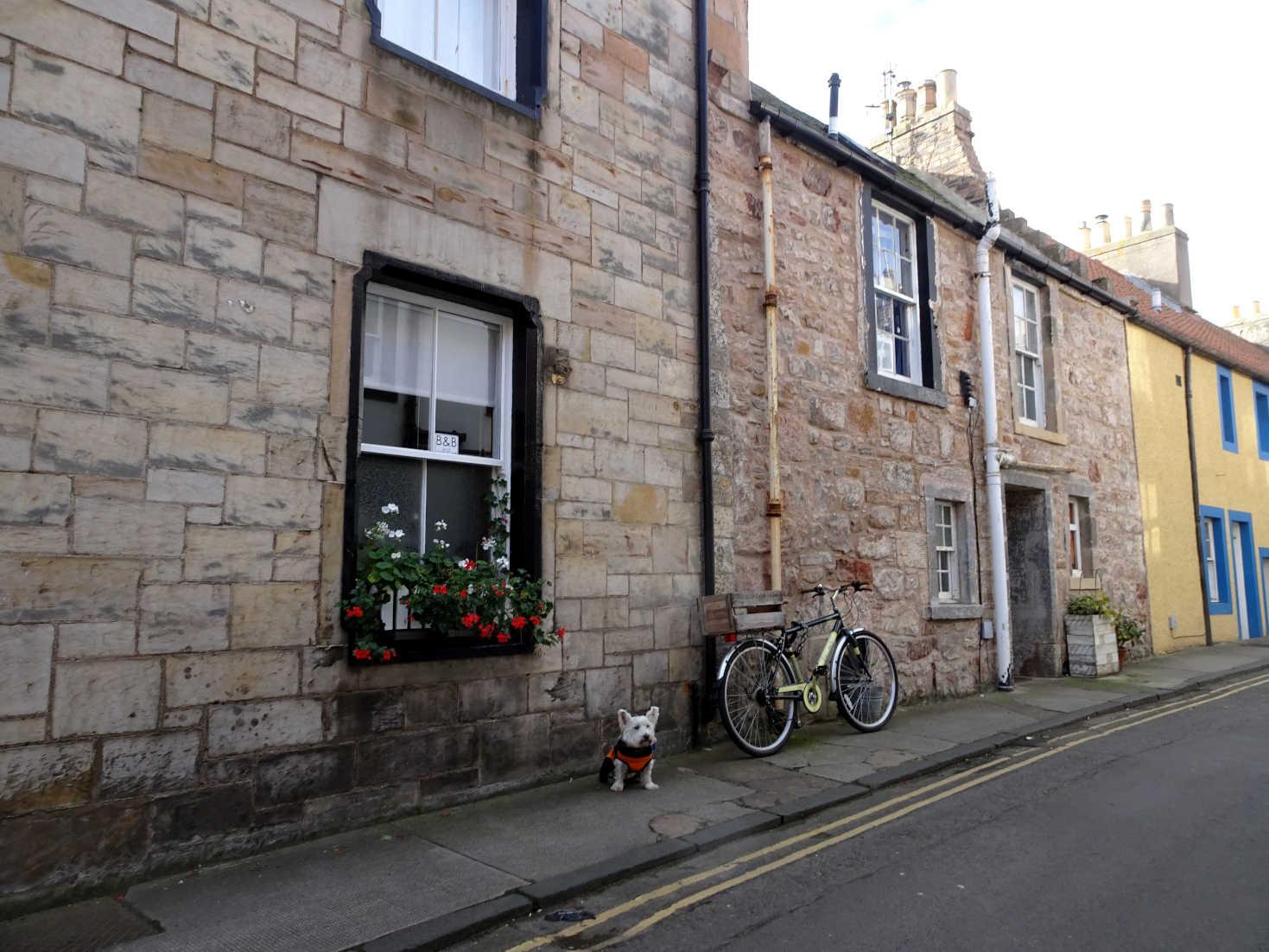 poppy the westie posing beside bike cellardyke