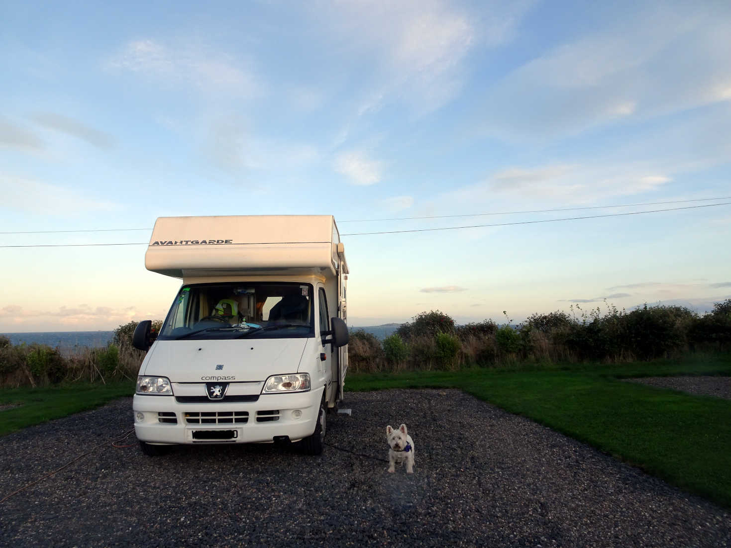 poppy the westy and betsy at anstruther