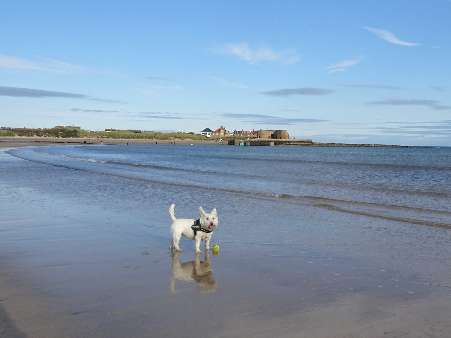 poppysocks at beadnell with kilns in background